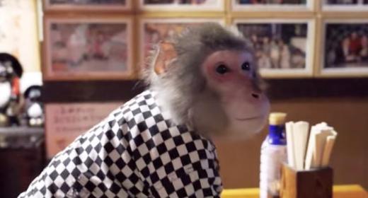 Dans ce bar japonais, on embauche des singes pour faire le service