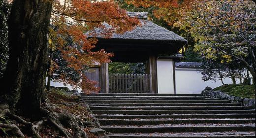 Le Japon, la nouvelle destination tendance