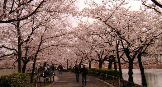 6 parcs de Tokyo à ne pas manquer